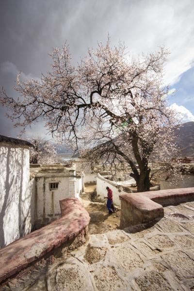 http://www.lauraportinaro.com/files/gimgs/69_chupsang-monastery.jpg